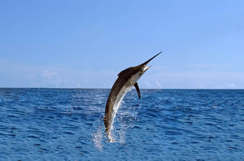 Fishing Charters In Myrtle Beach