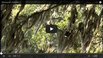 Brookgreen Gardens Video